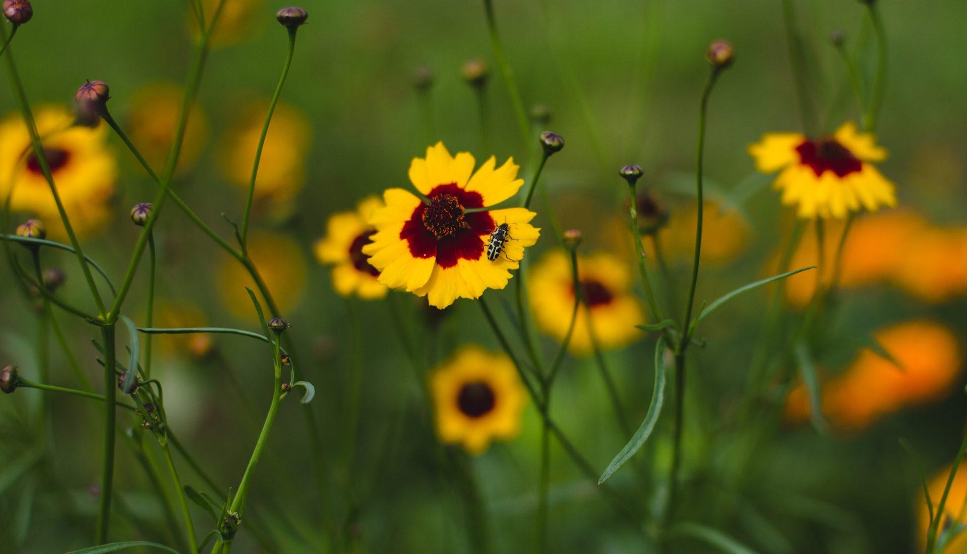 Primavera na Confeitaria | flores naturais para decorar bolos