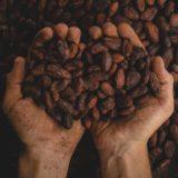Bean to bar como ferramenta para a confeitaria