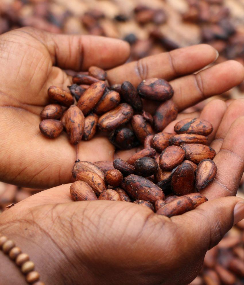 A revolução do chocolate