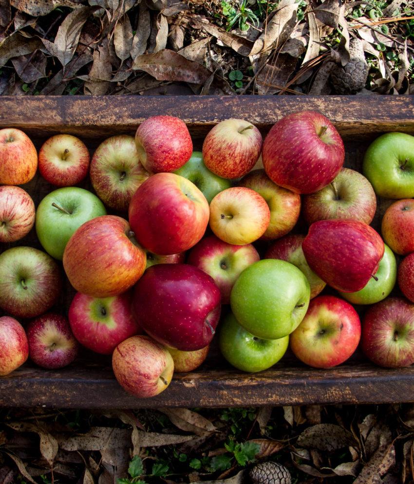 Conheça a sua maçã!