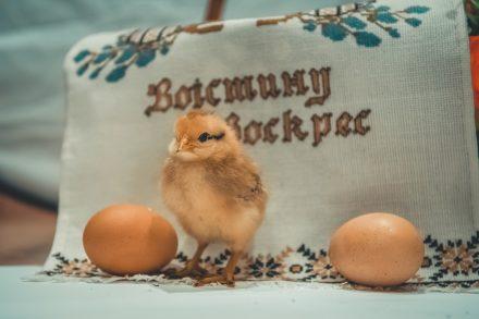O polêmico cheiro de ovo