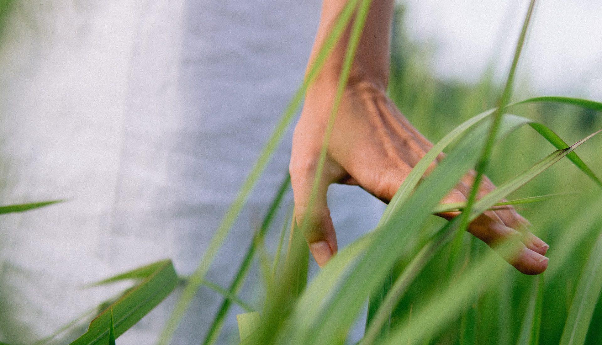 Sustentabilidade na alimentação